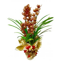 orquídea cimbidium top